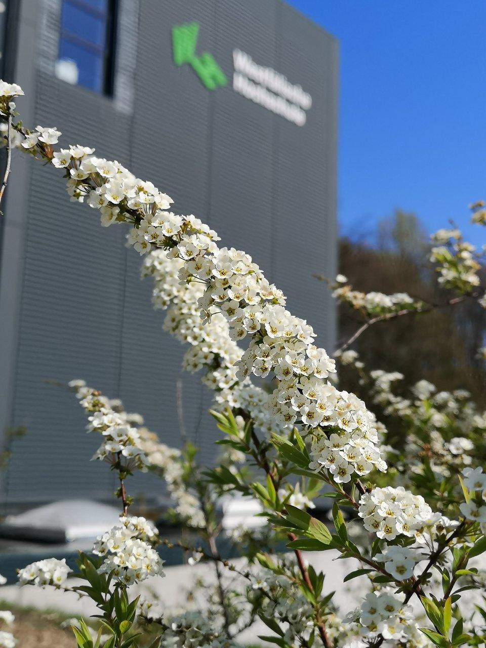 Ansicht eines Universitätsgebäudes im Frühling mit Blumen.