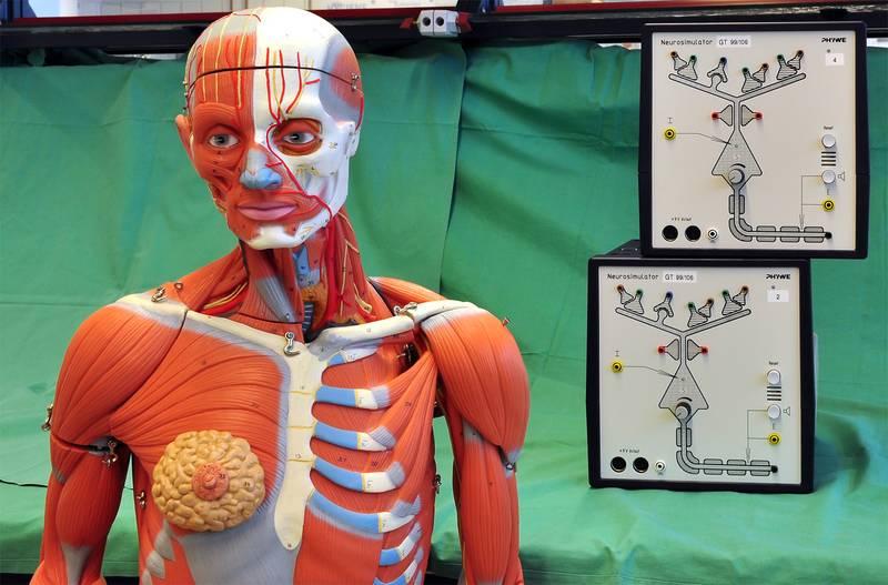 Anatomie und Physiologie